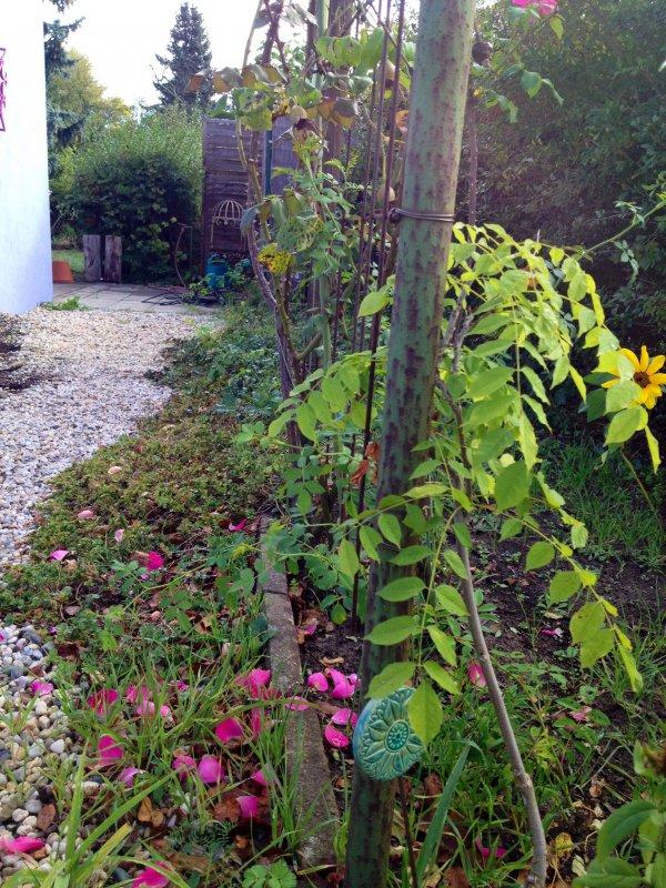 Garten In Brandenburg